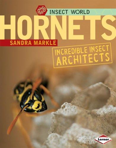 Download Hornets